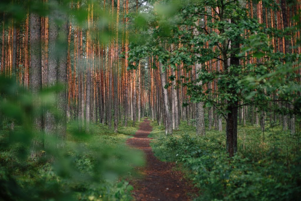 Path through the forest by Ugne Vasyliute - a journey to inclusion